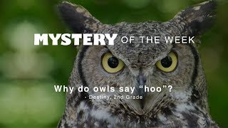 Why do owls say hoo?