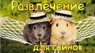 ♥ Развлечение для морских свинок ♥ Tips for guinea pigs