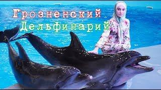 Грозненский дельфинарий: отдых, лечение, развлечение
