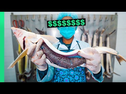 Why Caviar is so DANG Expensive!!! From Farm to Fine Dining!!