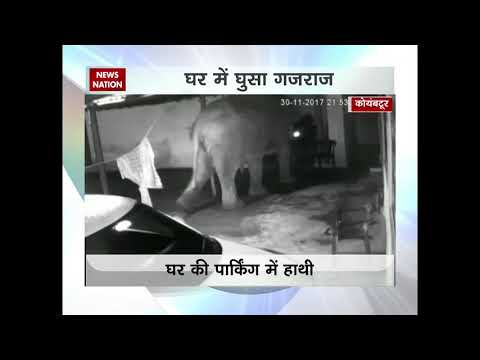 Elephant, calf enters house in search of food in Coimbatore