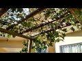 Como fazer estaleiro para uva