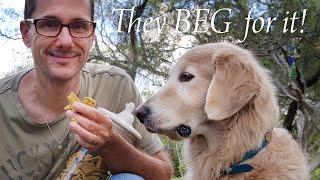 THE BEST DOG TREATS