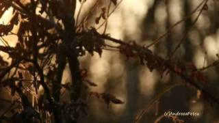 Video ERNESTO CORTAZAR - The Forest' s Awakening download MP3, 3GP, MP4, WEBM, AVI, FLV Juli 2018