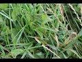 Советы ленивой огородницы: не копать целик. Медленный, но верный способ!