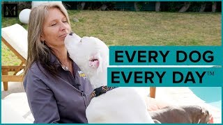 Every dog every day™ Dogs Playing For Life® x Animals Matter®