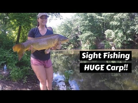 Sight Fishing for HUGE Carp! ~ Connecticut River Monsters