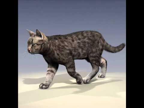 Free Virtual Warrior Cat Games