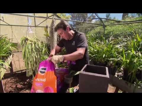 Grow Beautiful Orchids Using Miracle Gro Orchid Potting Mix Youtube