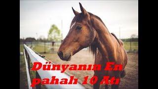 Dünyanın En Pahalı 10 Atı