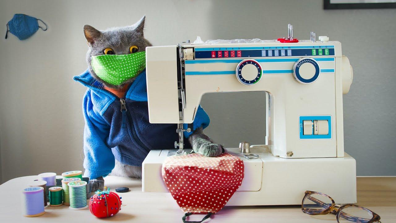 Download Quarantine Cat
