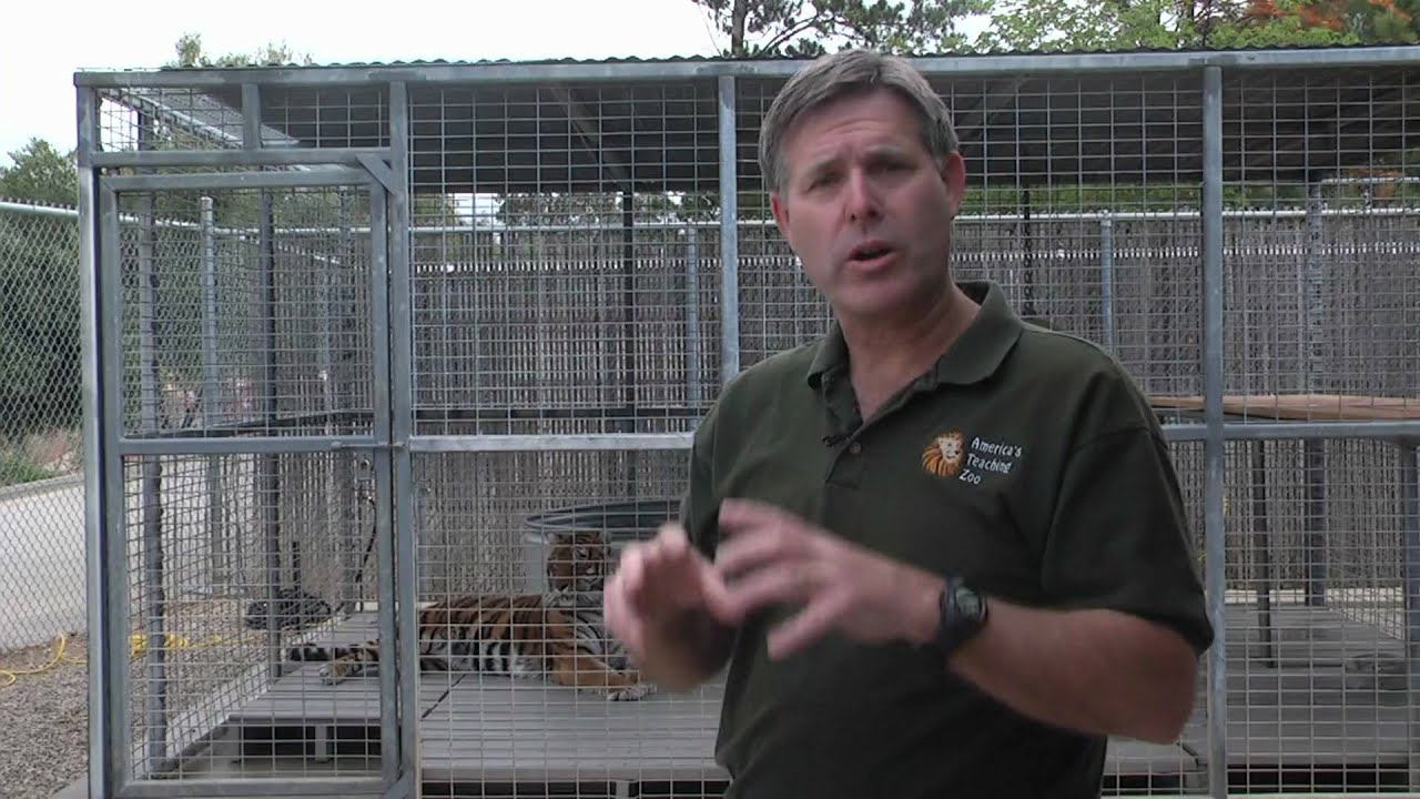 Zoo Animals : How Do Tigers Communicate?