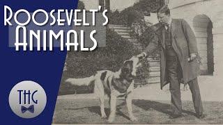 Theodore Roosevelt's Animals