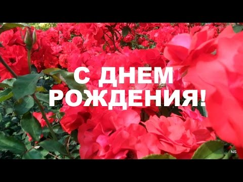 Поздравление с  Днем Рождения! Красивые розы. Вариант#2