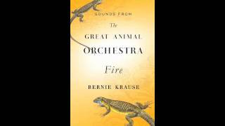 THE GREAT ANIMAL ORCHESTRA by Bernie Krause: Fire Sounds