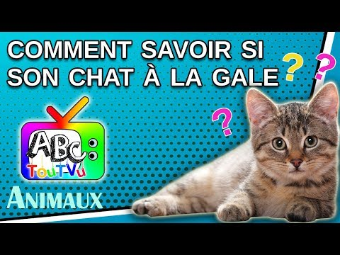 Comment Savoir Si Son Chat  à La Gale?
