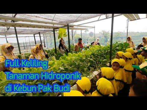 wisata-edukasi-full-keliling-taman-hidroponik-di-kebun-pak-budi-2019