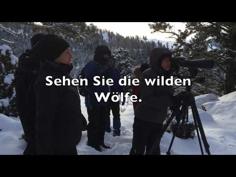 Yellowstone, Tiere im Winter zu Fuss entdecken!