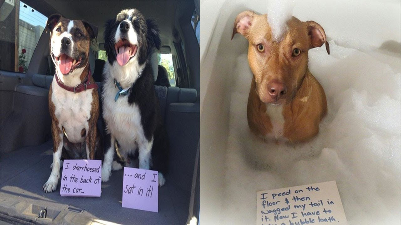 Guilty Dogs Were Caught Red Handed YouTube - 23 hilarious photos of pets caught red handed