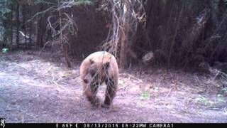 Trail Cam in Sequoia Crest, CA (2)