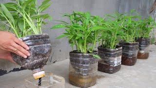How to grow vegetable in plastic bottles for beginners   Growing vegetable with seeds