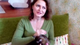 Кошка бурма шерсть, залысины около ушей - что это?