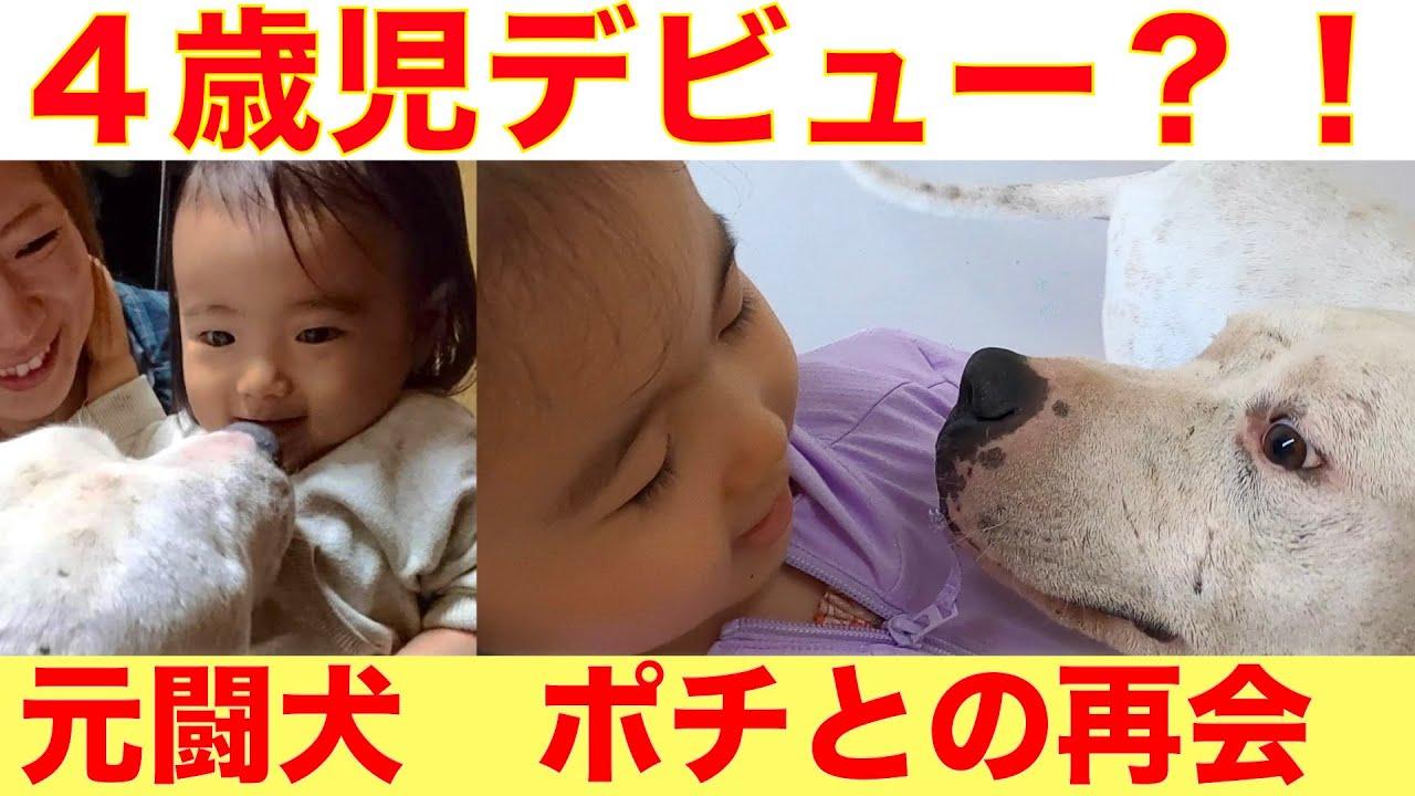 【4歳児が選ぶ将来のベスト相棒は誰?】4歳児の元闘犬ポチ、大型犬リンとの出会い編〜