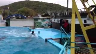 Галустян и дельфины(, 2014-05-31T10:03:14.000Z)