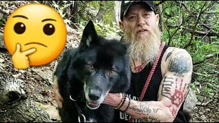 Are Blue Bay Shepherds Good with Other Dogs? - Dog Park Mayhem