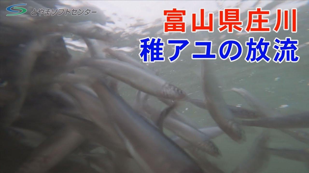 庄川 漁業 協同 組合