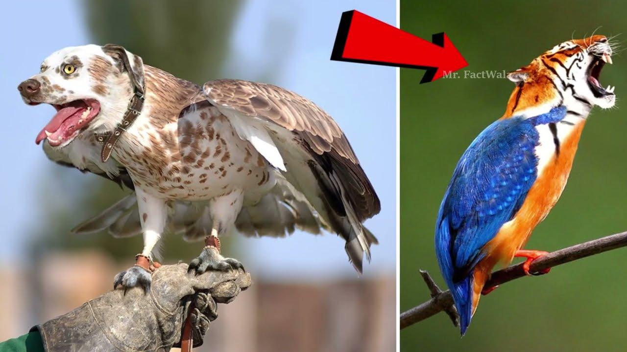10 ऐसे पक्षी जिन्हें देखने के लिए नसीब लगता है,देखलो कही और देखने नहीं मिलेंगे | Most Rare Birds