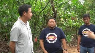 Potensi Kebun Petani-Komoditas Kakao