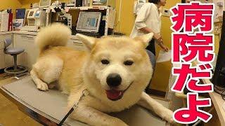 我が家のワンコ達は苅谷動物病院でお世話になっております 病気を早期発...