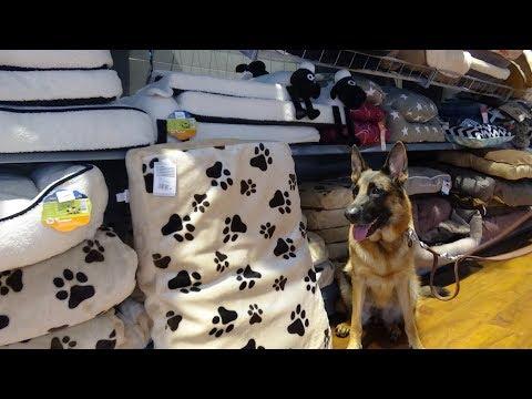 Покупки из зоомагазина для собак