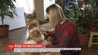 До України прийшла мода на собак маленьких порід