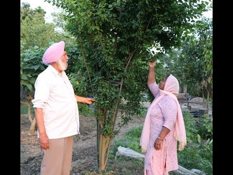 King of Organic Farming |Principle Tarsem Singh |  Hard working farmer family