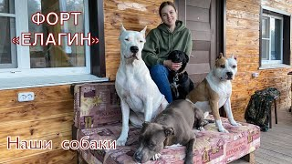 Форт Елагин / Наши собаки / Стафф, Питбуль, Дворняга, Аргентинский дог / Off Grid Living With Dogs