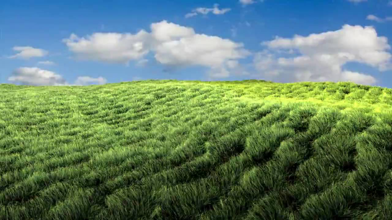 Grass Field Stock Images, Royalty-Free Images &amp- Vectors   Shutterstock