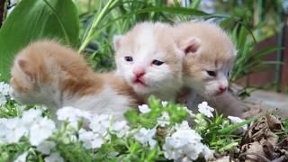 Three little kittens are talking | Cat Manya