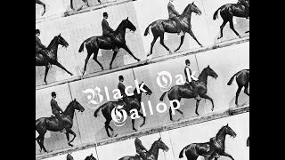 "Black Oak - ""Gallop"""