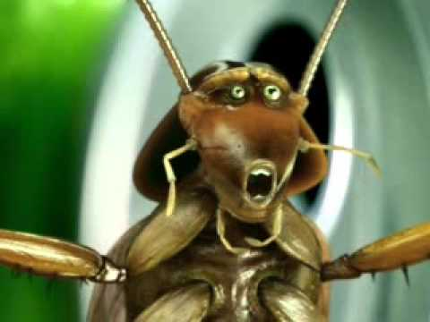 Cockroaches Benchpress