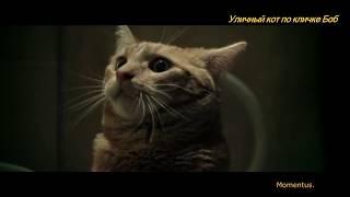 Джеймс Боуэн ,восстанавливающийся от наркотической зависимости .Уличный кот по кличке Боб 2016г.