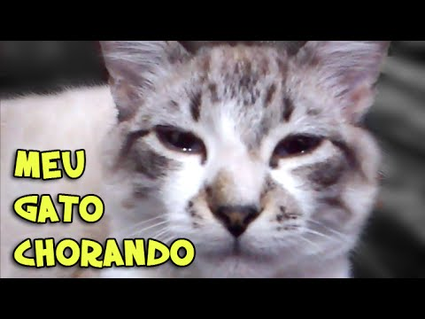 Gato Chorando - Cat Crying - YouTube