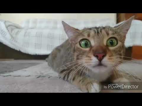 Lustige  Tier Videos Zum Totlachen