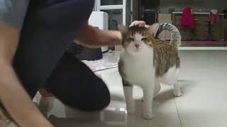 24h貓咪觀察室#720 父子情深的汝爸&歐戀 20210118 (MiMi醬&黑妞&阿金&黑輪 歐戀) Cat Observation