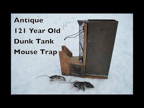 Antique 121 Year Old Dunk Tank Mouse Trap In Action - Peerless Automatic Mouse Trap