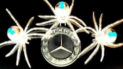 Spider Mind Games Mercedes Benz Spider Infestation Pt2 Bindi Update EDUCATIONAL VIDEO