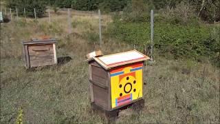 Pszczoły nieleczone 2 - 4 lata - karmienie 16 września