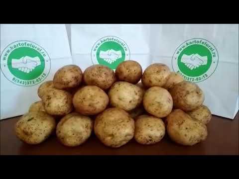 Вопрос: Сорт картофеля Аризона какие фото, описание?
