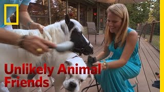 Fan Mail for Lilly and Einstein | Unlikely Animal Friends